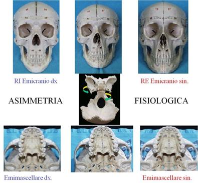 accrescimento-cranio-posturale