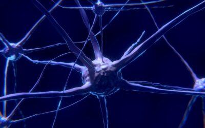 La neuroplasticità: piedi, bocca e masticazione