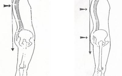 Importanza del Terreno Biotipologico in Ortognatodonzia